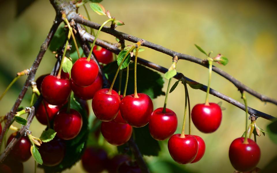 Natale: regala un albero o un orto, per te un omaggio dal frutteto
