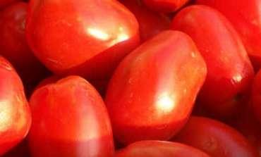 I pomodori, ecco come conservarli per l'inverno