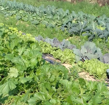 Metro quadrato di orto (bio), continua la campagna, cambiano i prodotti