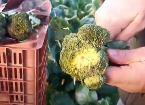 """LE RICETTE DI """"IO NON SONO UNO SCARTO"""": Pesto ai broccoli"""