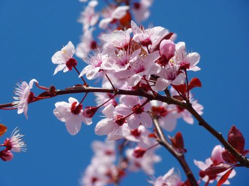 La nuova stagione della frutta, adotta un albero per garantirti il prodotto